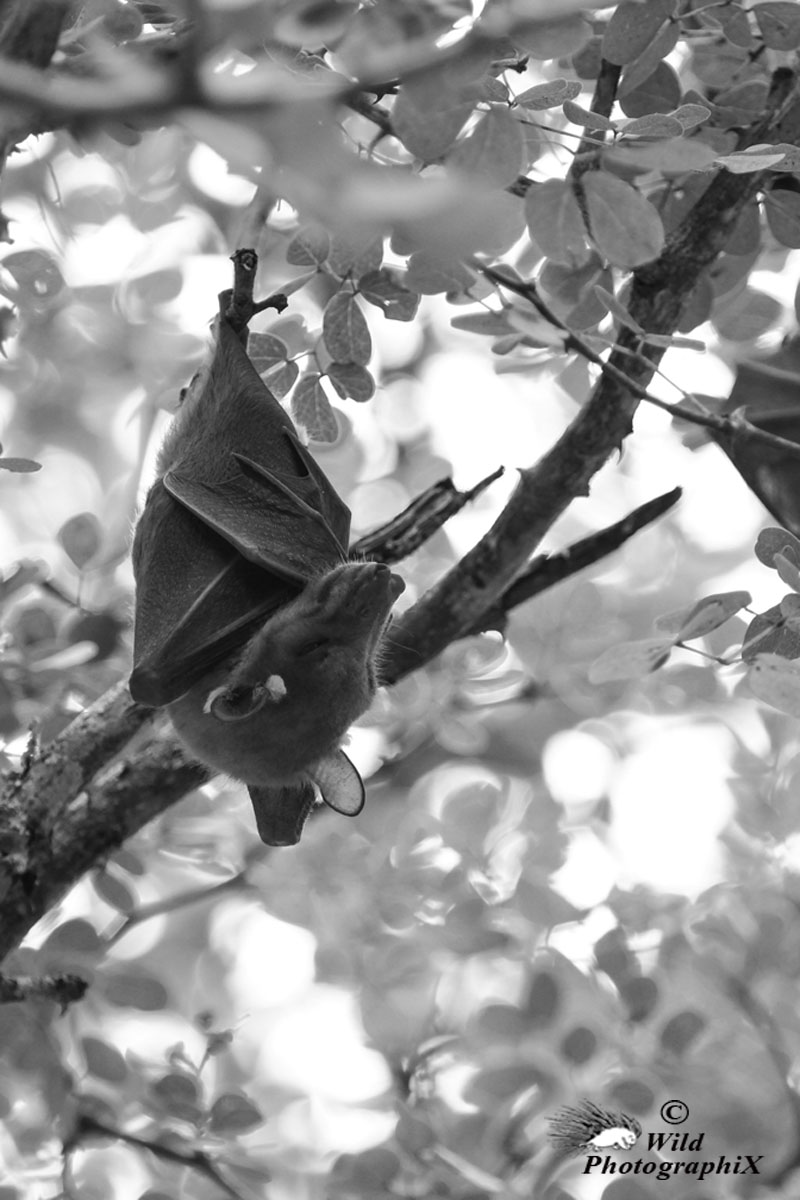 Anna-C. Nagel / Wild PhotographiX