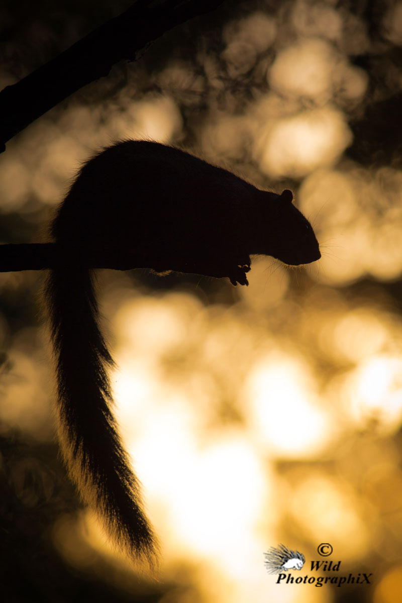 Caroline Schiess / Wild PhotographiX